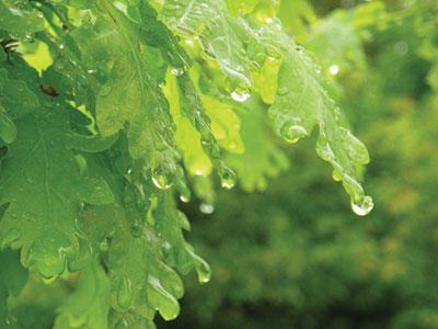 Рис.11. Исходное изображение зеленых листьев